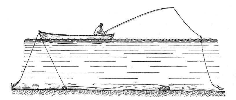 Ловля в проводку с берега на пшеницу