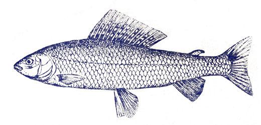 какая рыба клюет в ноябре видео