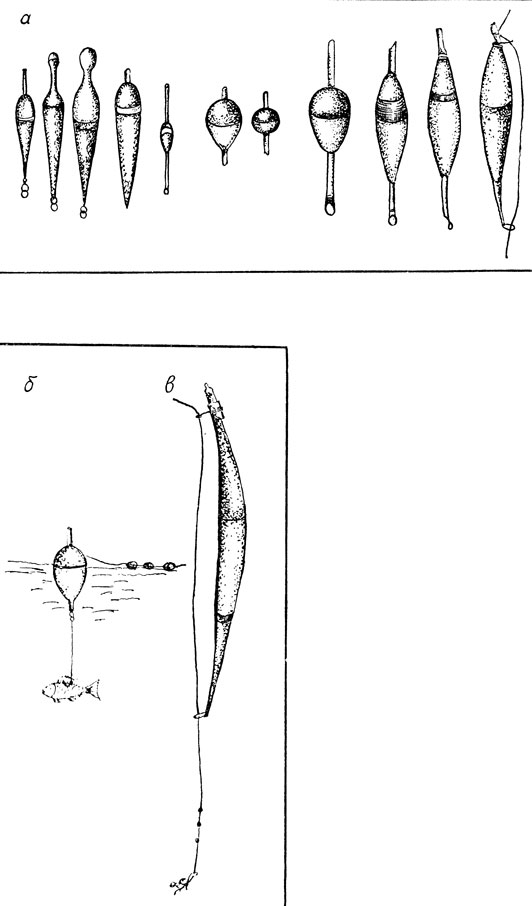 Изследование Незнакомок Водоема Для Поплавочной Удочки