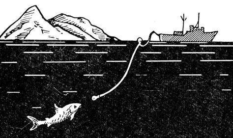 Рис. 143. Схема лова крупной рыбы на импульсную электроудочку